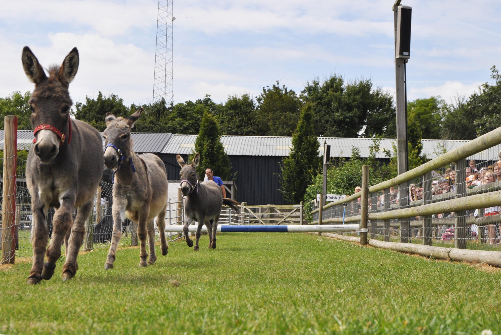 Donkey Derby Gallops Back To Barleylands This Summer