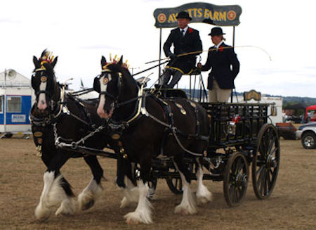 Essex Heavy Horse Show
