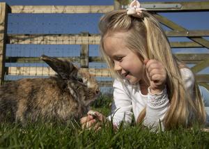 girl and a rabbit at barleylands farm park billericay essex