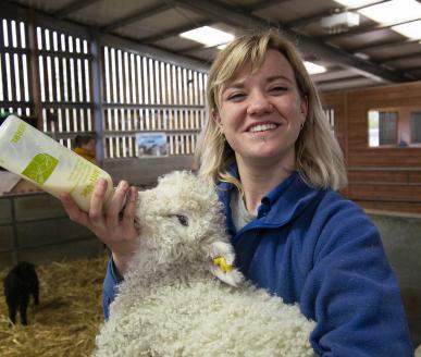 Barleylands Farm Park Member of staff bottle feeding a lamb in our animal barn