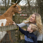 Mum and son feeding a goat at barleylands