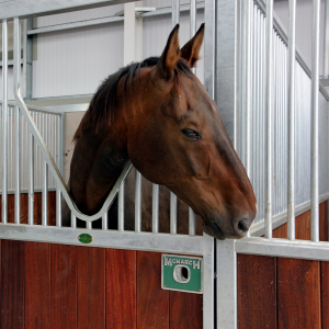 Horse in Barleylands Equestrian Centre Stables Essex